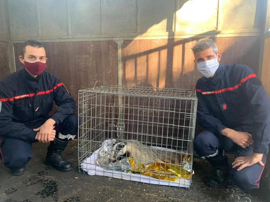 L'animal a été secouru par les pompiers et devrait être relâché ce week-end.