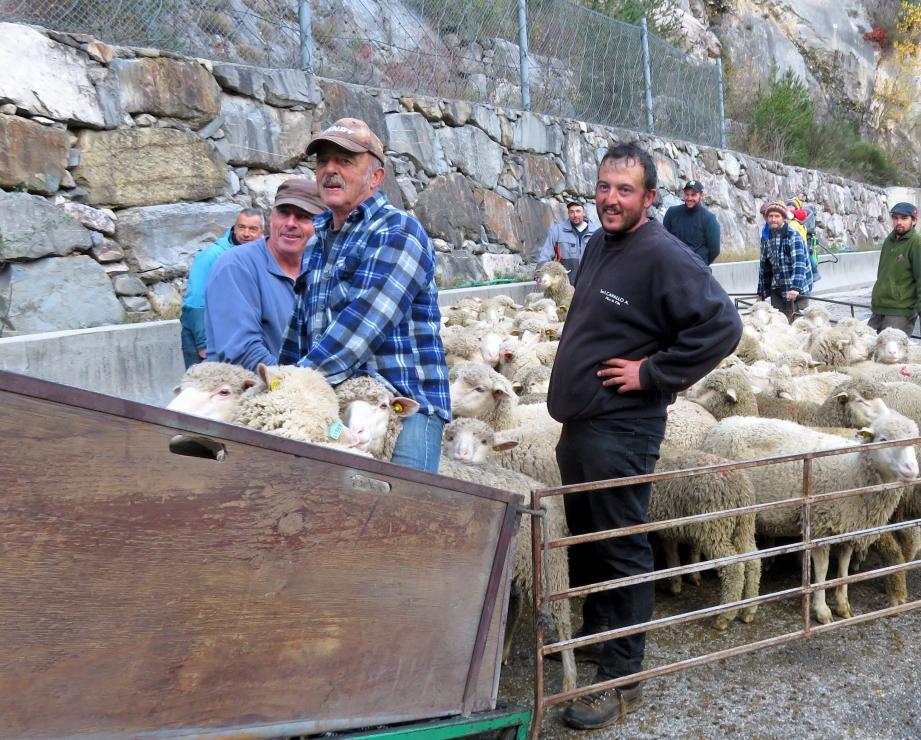 Grâce à l'aide de la chambre d'agriculture et de l'ANMONM, les brebis sont arrivées à Istres.