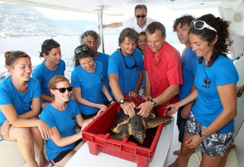 15 h 40 hier : à 5 miles au large des côtes monégasques, la tortue retrouve son milieu marin naturel.