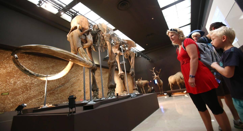 Le fameux mammouth du musée d'Anthropologie.
