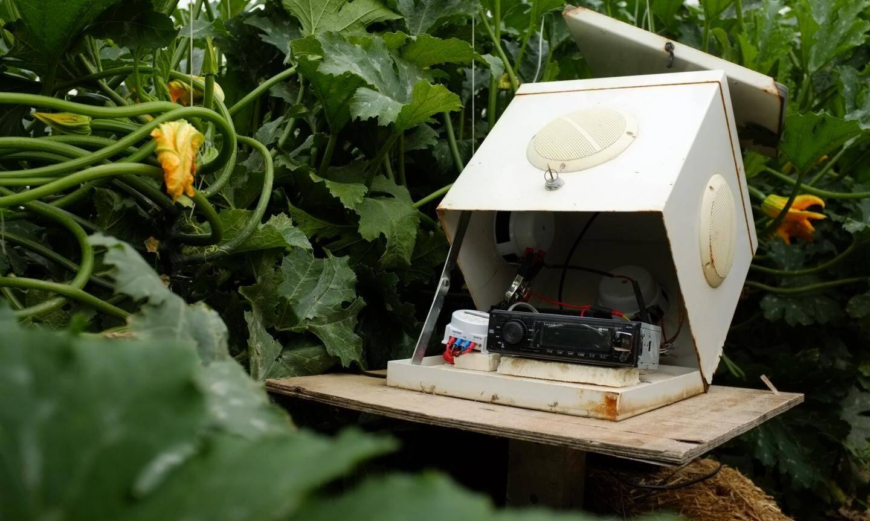 Le boîtier est composé d'un vieil autoradio, d'un programmateur, d'une batterie et d'un panneau solaire.