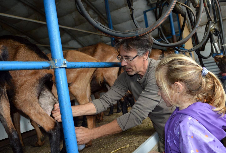 Les enfants étaient invités à participer à la traite des chèvres et à goûter le lait tiède.