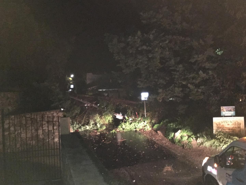 L'arbres s'est effondré dans la nuit de jeudi à vendredi.