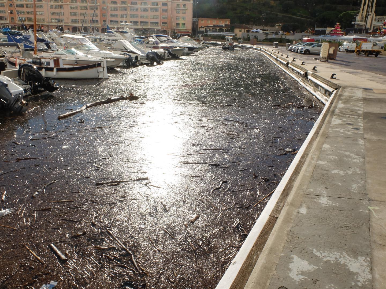 Les macro-déchets dans le port Hercule de Monaco, vendredi matin.