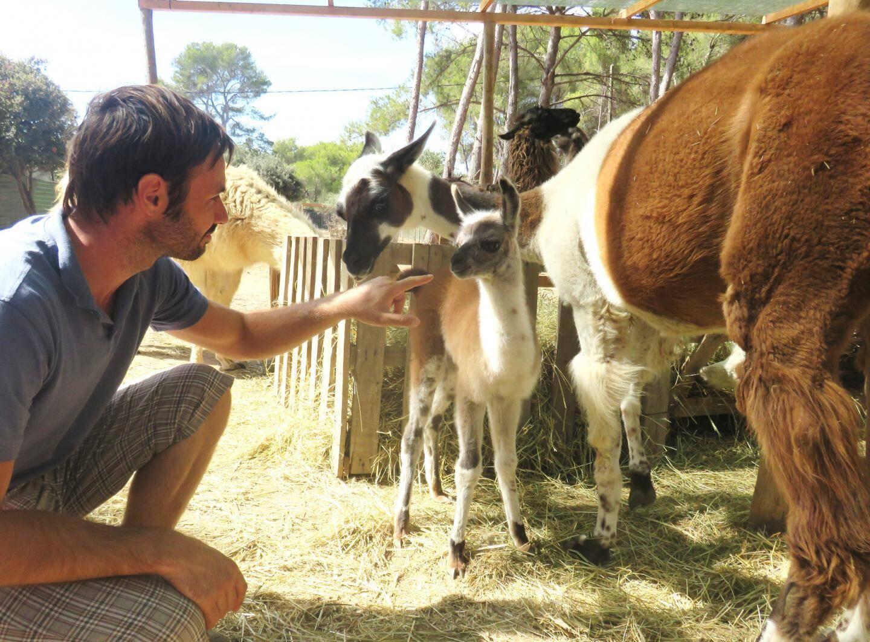 La zoothérapie se pratique avec des chiens, deschats, des lapins et même des lamas de Six-Fours!