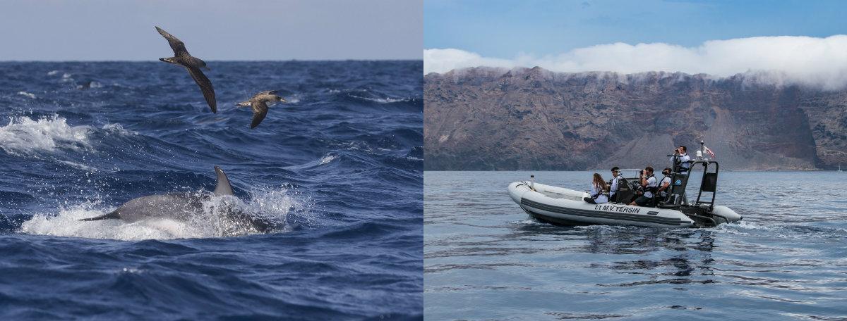 Cinq ornithologues ont étudié les interactions entre les oiseaux marins, les cétacés et les poissons.