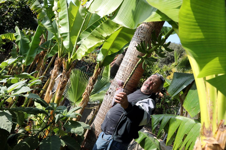 Bernard Neveux est un jardinier passionné. Toute l'année, il s'amuse en plantant et en récoltant toutes sortes d'arbres à fruits exotiques.