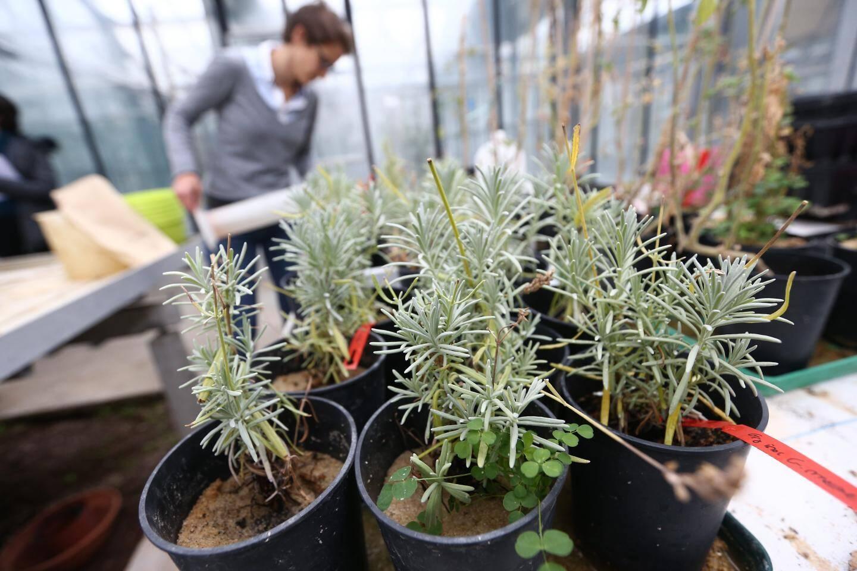 Des biologistes de l'Inra travaillent sur des champignons qui permettent aux plantes de pousser sans engraischimique.