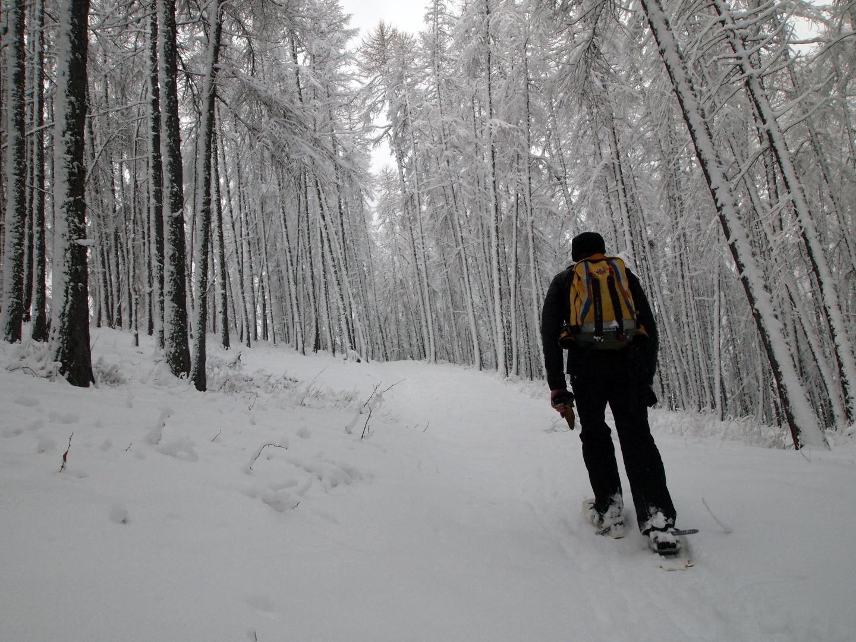Des airs de forêt sibériennes… qui s'illuminent dès les premiers rayons de soleil…