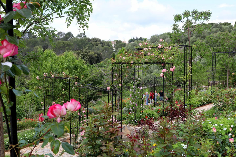 La roseraie du Couloubrier, un écrin pour 18 créateurs de roses…