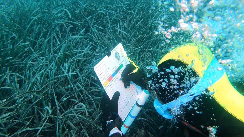 Mission de collecte de données dans les herbiers de posidonies. Photo Franck Daumas