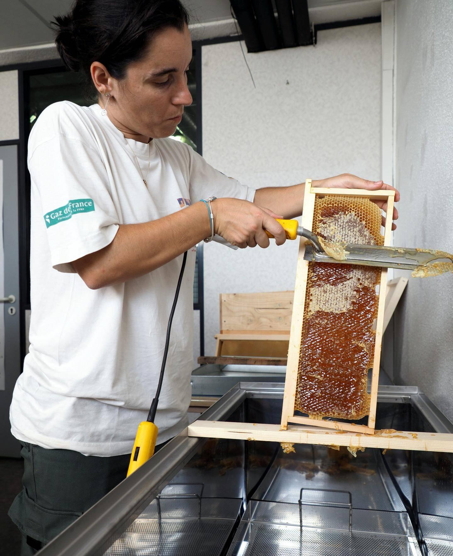 Les abeilles ont déposé quelques gouttes de venin pour conserver le miel avant de fermer hermétiquement l'alvéole avec de la cire. Avec un couteau chauffé, Isabelle surprime l'opercule de cire. Le miel scintillant apparaît alors.