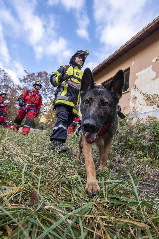 Les chiens de secours sont aussi là pour s'exercer.
