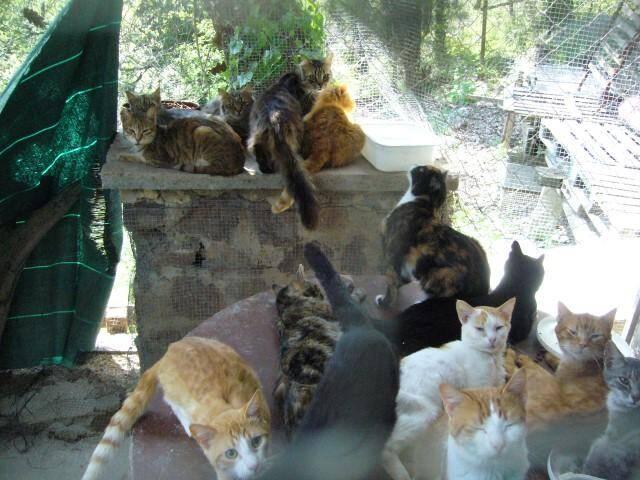 Cette photo aa été prise au printemps 2018, date à laquelle l'ex-occupant des lieux s'occupait de nombreux chats.