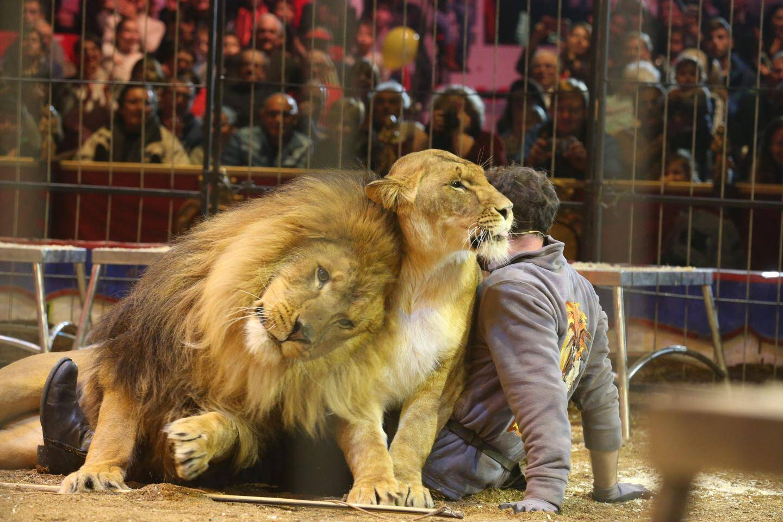 Instant câlin entre Martin Lacey Jr et ses lions King et Cleo. Ci-dessous, Joy Gartner avec son jeune fils en pleine acrobatie avec l'éléphante Belinda.