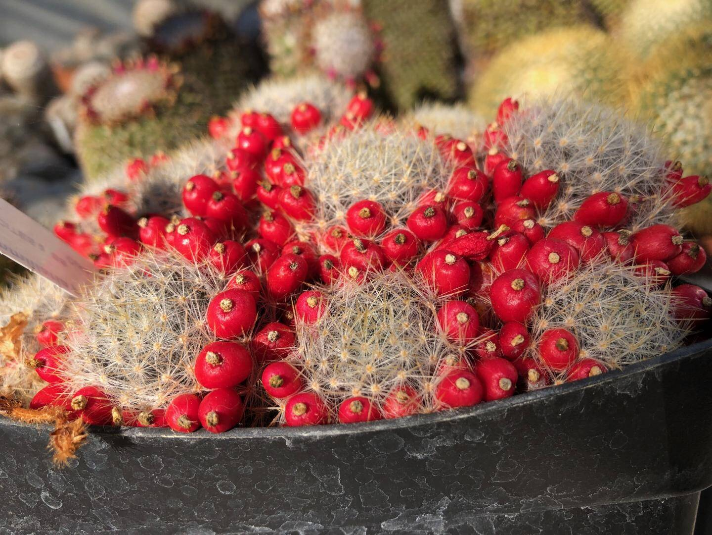 Ici, les plantes fleurissent et fructifient, grâce aux bonnes conditions qui leur sont offertes.