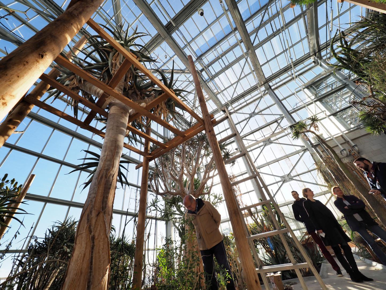 Cet Aloe Pillansii est le seul exemplaire au monde capable de fleurir en centre botanique.