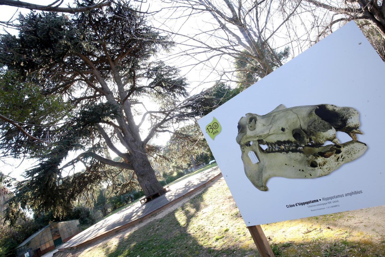 Le T-Rex de 4 mètres de haut promet de belles sensations fortes aux bambins. Les quatre aires de jeux devraient être accessibles d'ici le printemps.