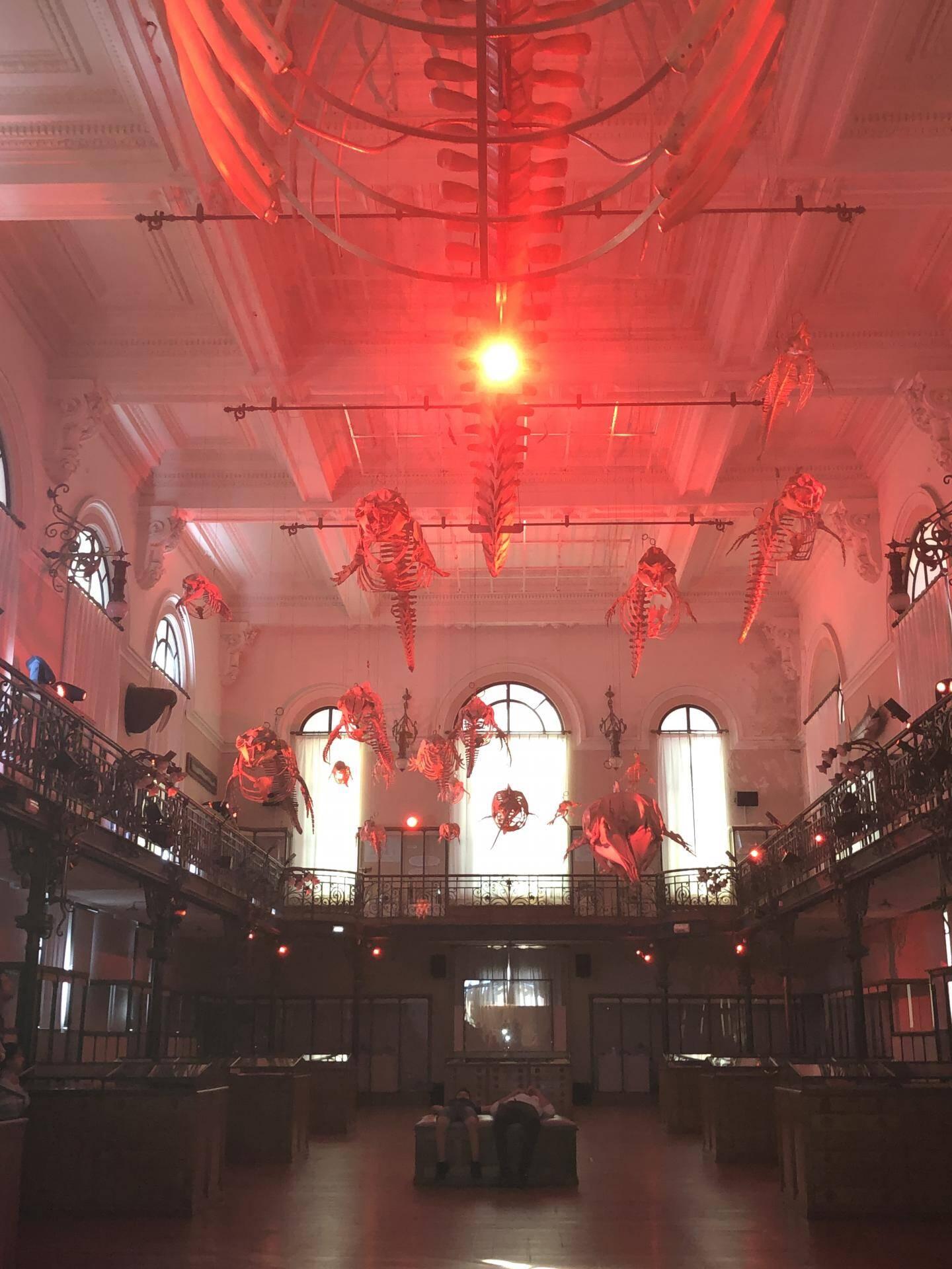 La salle des baleines est habillée par les lumières.