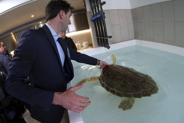 Le centre peut recevoir 5 à 8 animaux concomitamment dans ses bassins.