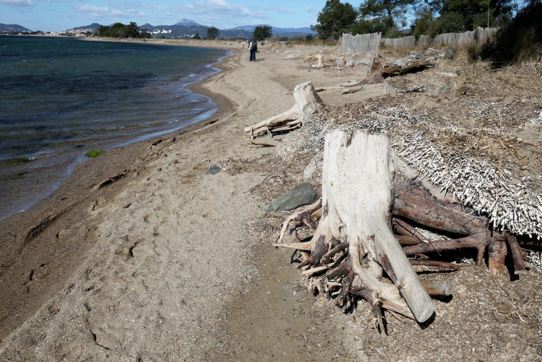 L'érosion des plages aux Vieux salins d'Hyères.