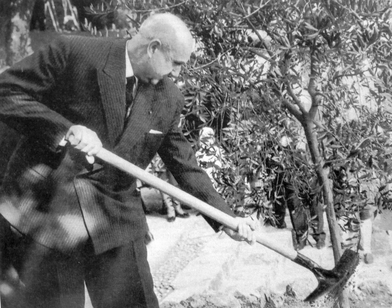 Robert Boisson ancien maire de Monaco et ancien président du Comité des traditions monégasques, plantant un olivier au parc Princesse-Antoinette.(DR)