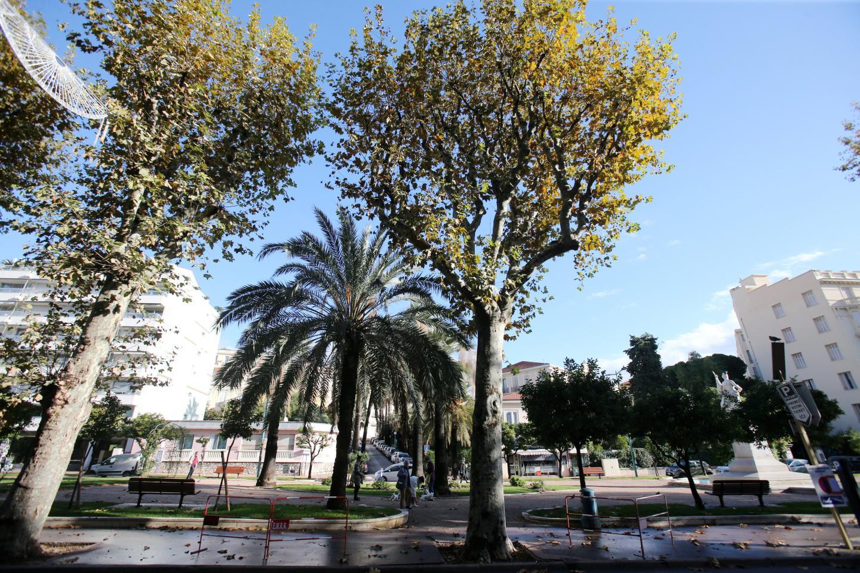 L'Aspona n'a pas digéré la coupe des magnolias de l'avenue de Verdun.