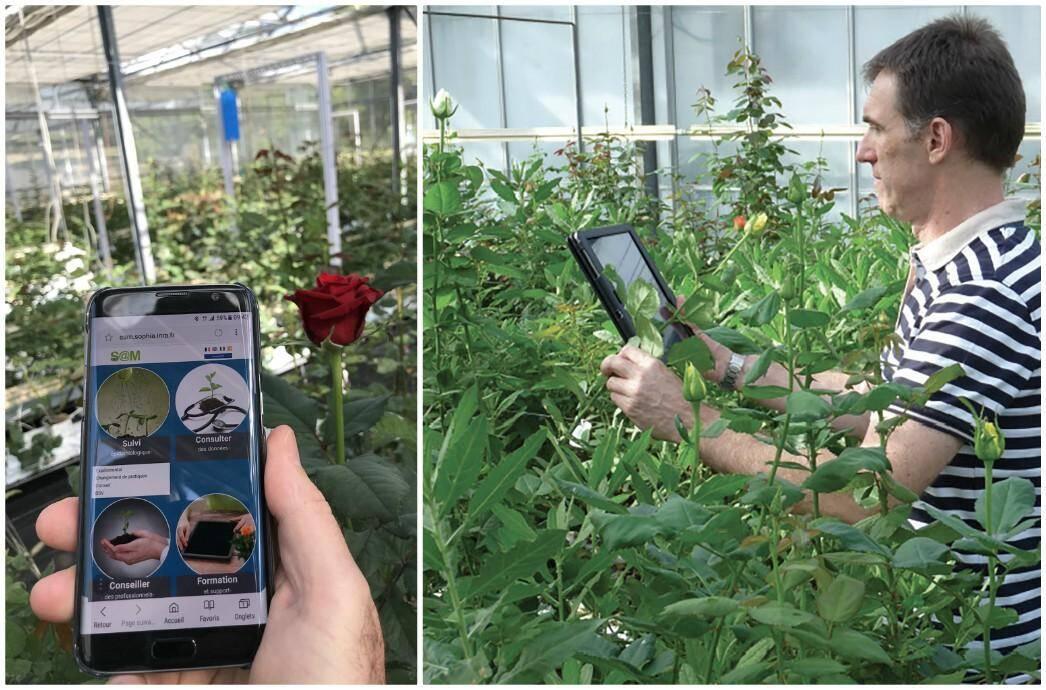 Cet outil permet aux producteurs d'observer leurs cultures et de limiter l'usage de pesticides. Sur le terrain, Bruno, ingénieur agronome, les accompagne.
