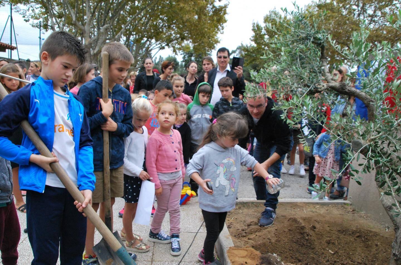 Les enfants ont apporté de la terre des différents quartiers de Bormes pour la disperser autour de l'arbre.