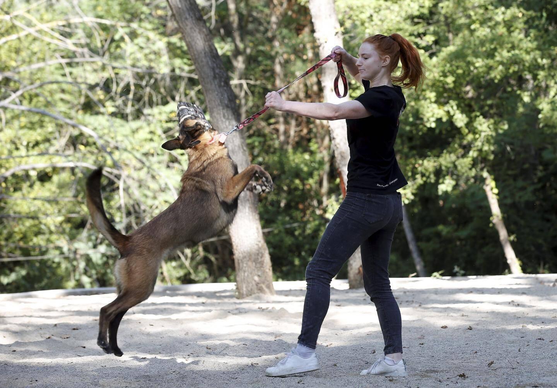 La rééducation d'un chien requiert de la patience.