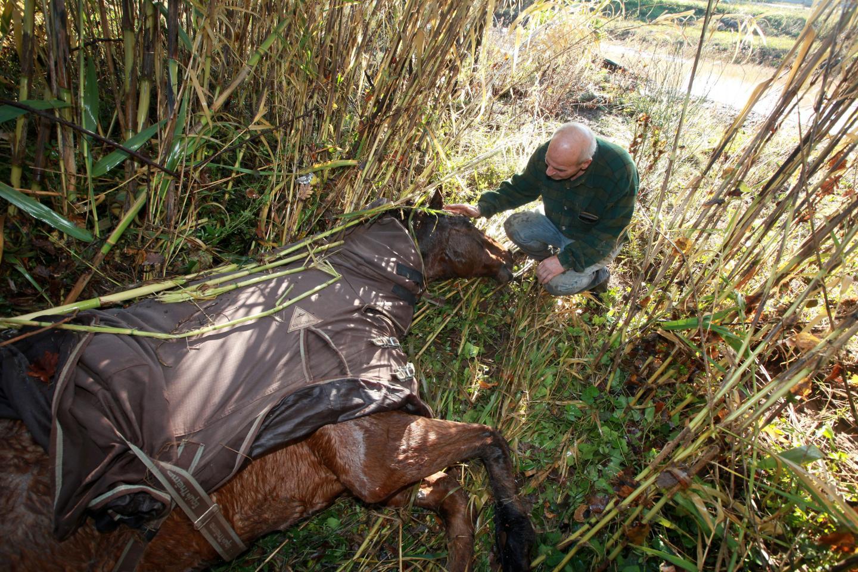 Ancien éleveur, Ugo, le beau-père, est dévasté par le chagrin. Il aimait Kai comme un fils.