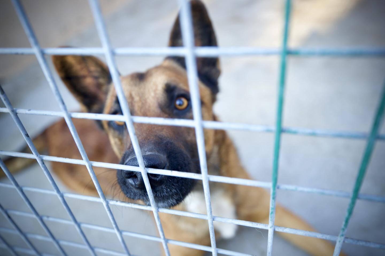 Quand on leur sert un repas de Noël, les chiens du refuge n'ont pas besoin de laisse pour en mettre un sacré coup de collier!