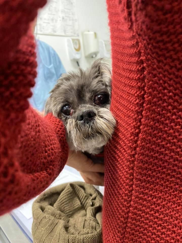 Une cagnotte est ouverte pour financer ses soins