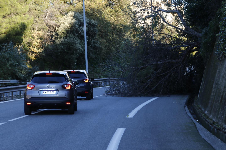 Un arbre a été arraché par les violentes bourrasques de vent bloque une voie sur la D6017 à Antibes.