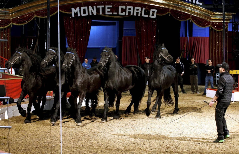 Sur la piste et autour du chapiteau de Fontvieille, la quarantaine de chevaux de la grande cavalerie du  cirque Knie ont commencé à prendre possession des lieux.