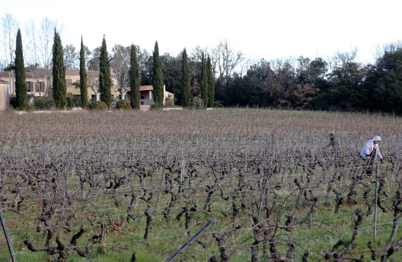 En cette période hivernale, les vignes sont taillées.