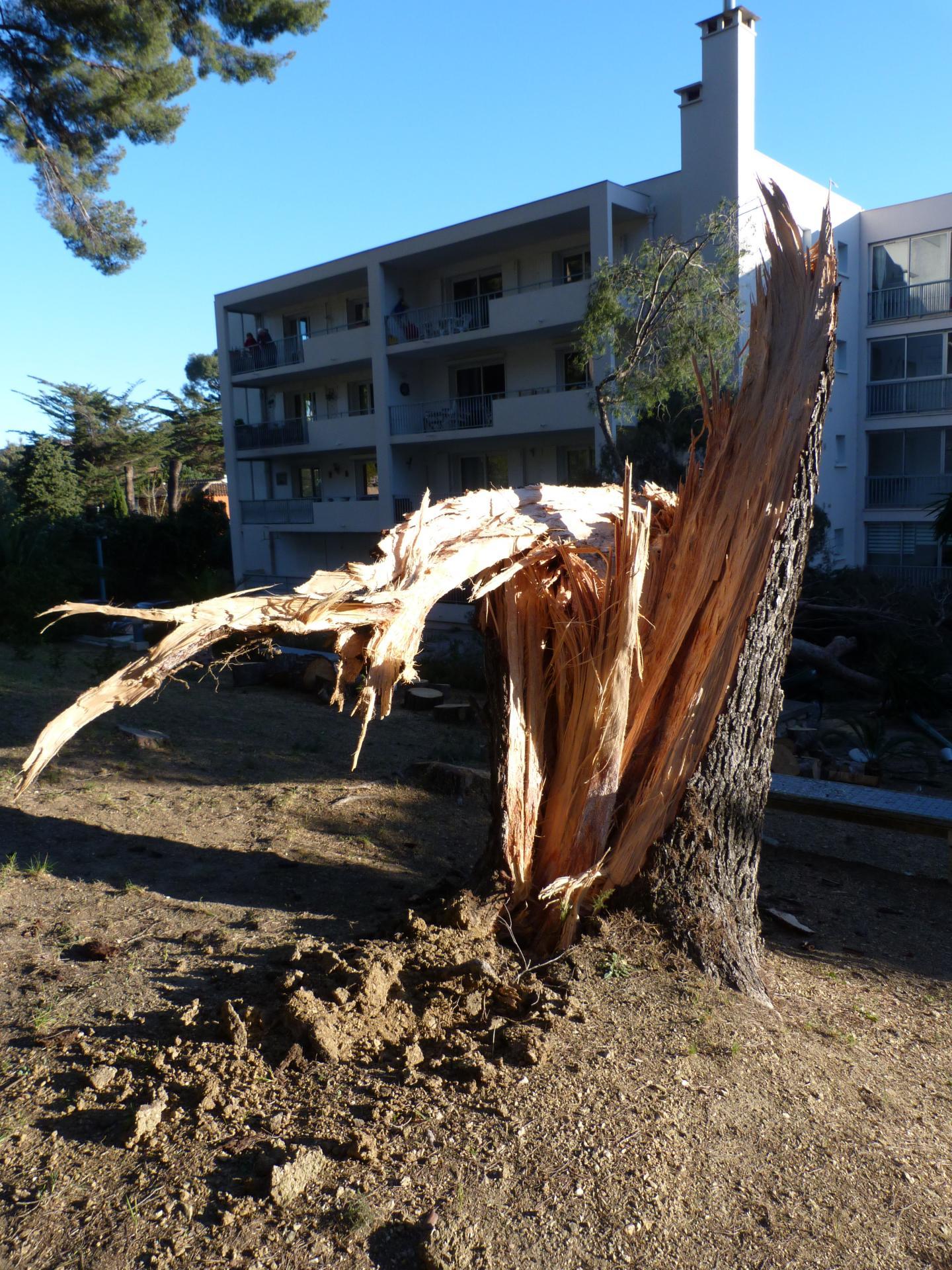 Le tronc, qui était sain, a cassé à la base.