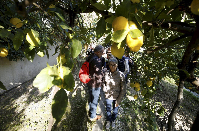 Les citrons de Menton, toute la richesse de la Ville...