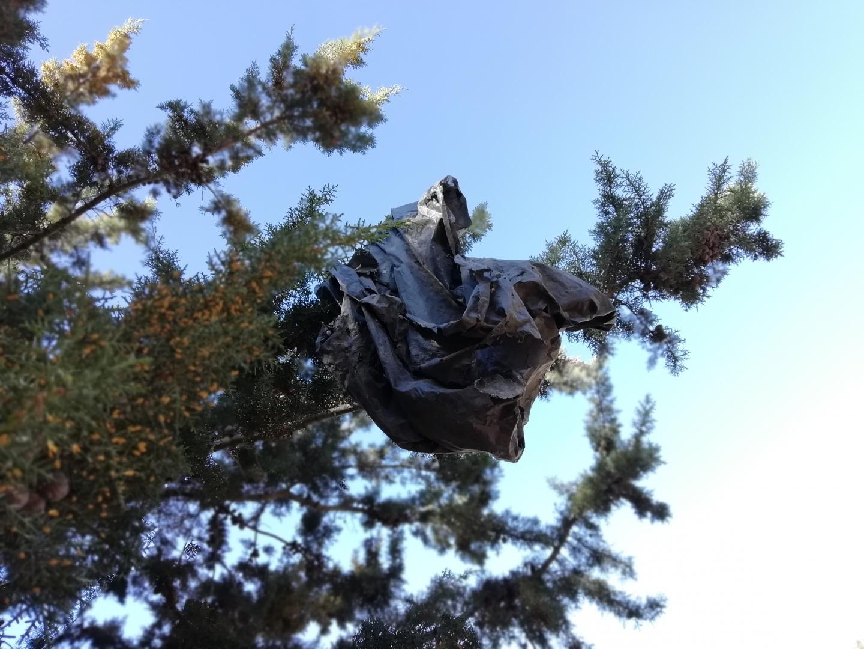 Des déchets restent prisonniers des pins.