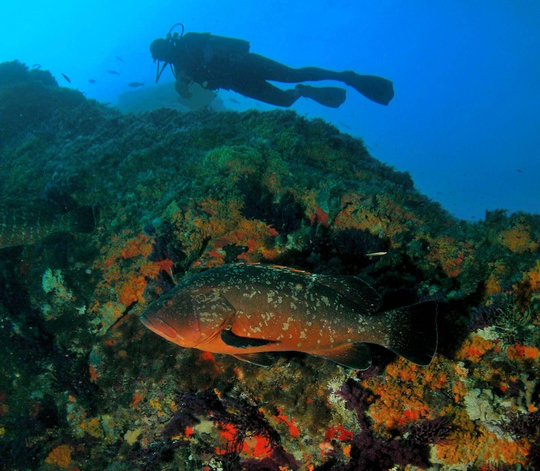 Etendre les aires marines protégées (ici Port-Cros) à 50% de la surface des Océans représente un coût de 10 à 20 milliards de dollars par an, à l'échelle de la planète.