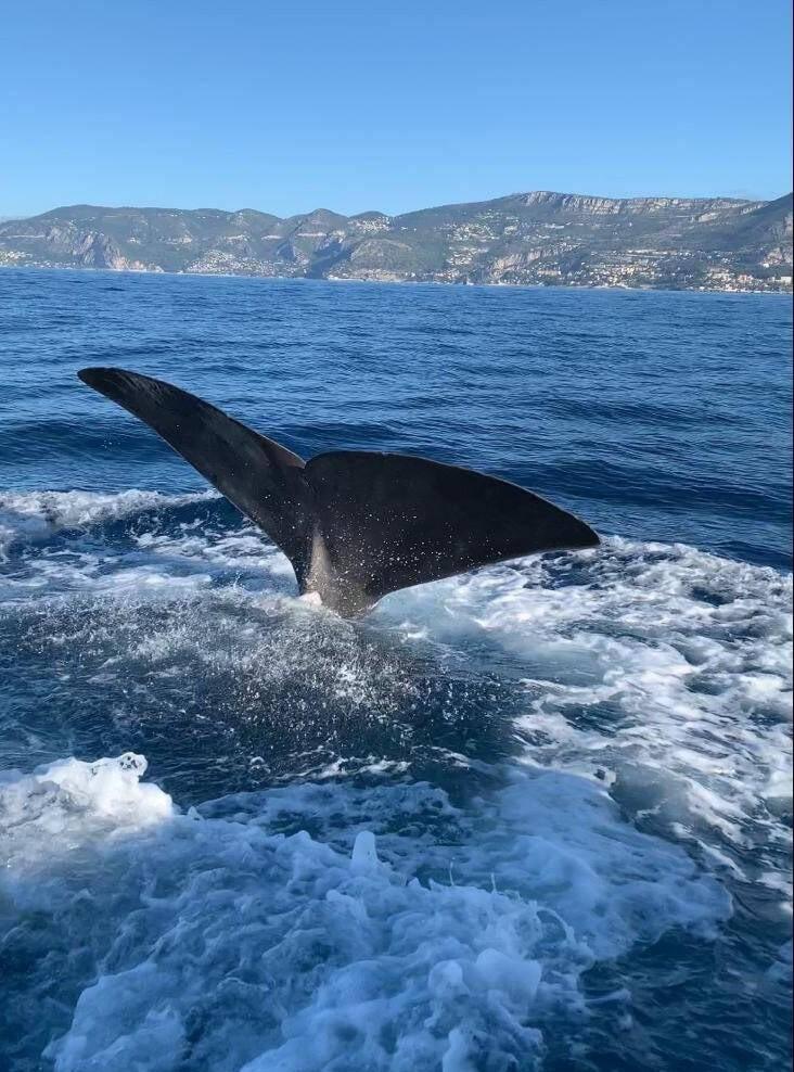 Légende 2 : L'Accord Pelagos rappelle que l'on ne peut pas observer les mammifères marins n'importe comment.