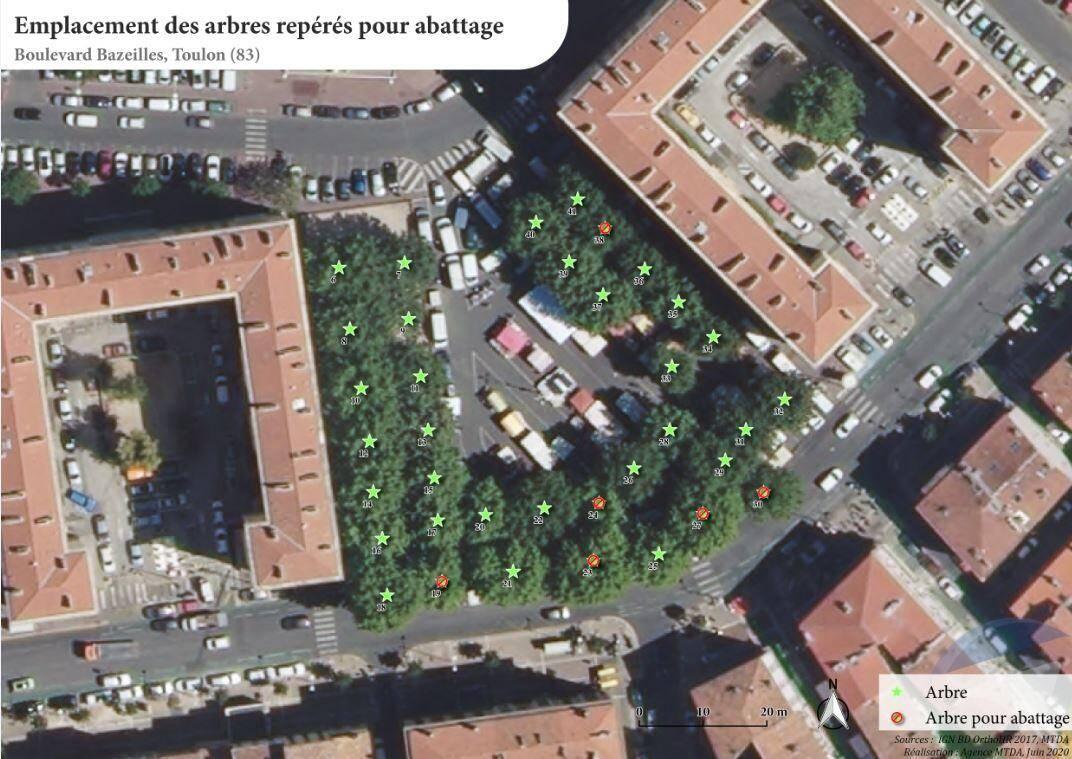"""Les six platanes contaminés (en rouge) seront abattus à terme. Les autres (en vert) sont """"à priori"""" sauvables."""
