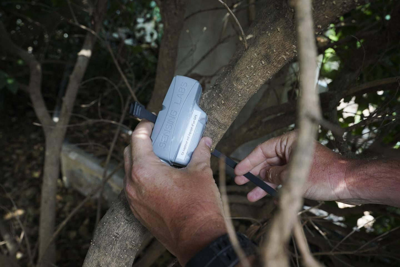Au Square Gastaud, un capteur est installé dans un arbuste.