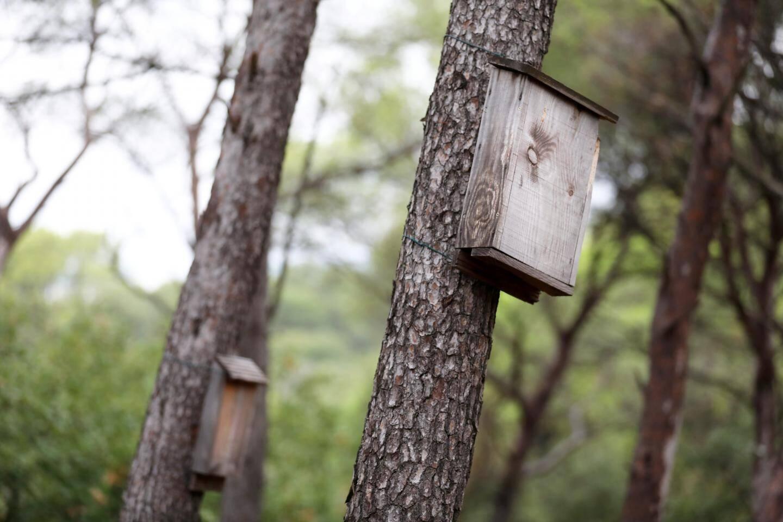 Les chauves-souris aussi méritent qu'on leur consacre des nichoirs.