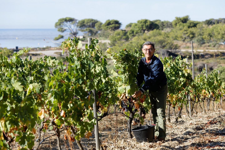 Quarante-cinquième et dernière année de vendange pour le responsable du vignoble et des espaces verts de l'île des Embiez.