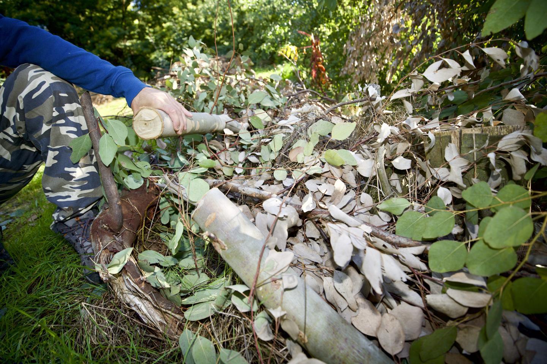 Les plantations de Populus, une variété prisée dans les bouquets, sont saccagées. Le préjudice se fera sentir aussi sur la prochaine récolte.