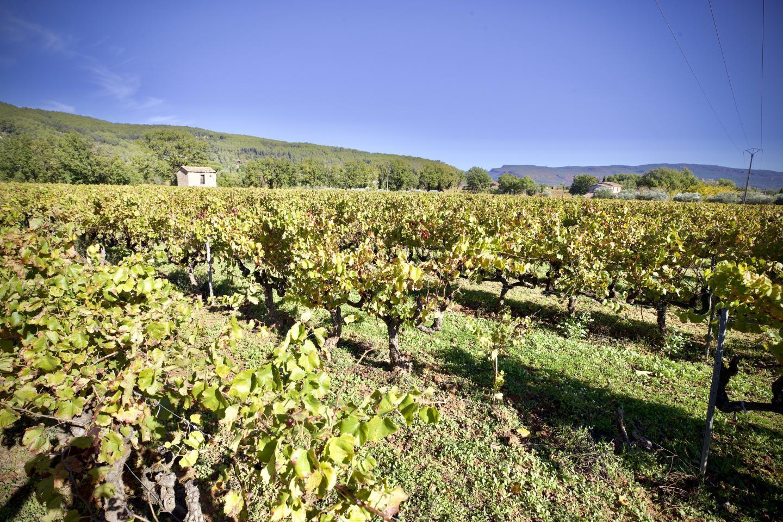 Le village compte dix domaines viticoles et une coopérative.