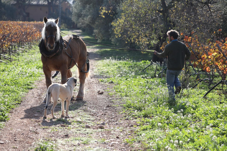 Fabrice Raymond laboure grâce à son cheval Athos.