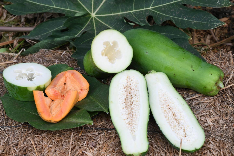 La papaye peut être dégustée mûre, de couleur orangée, ou verte en salade, par exemple.