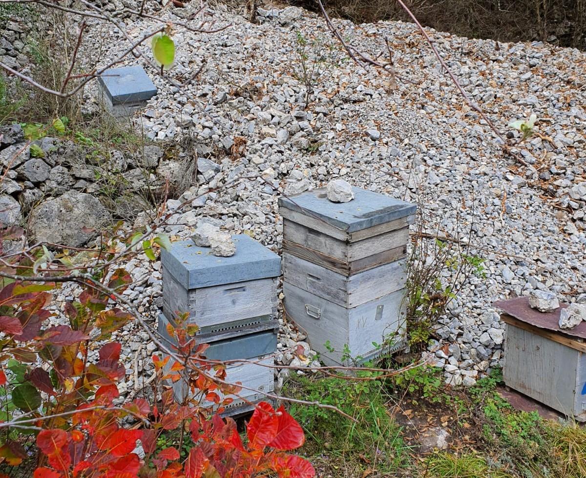 Les ruches ensevelies sous les cailloux.